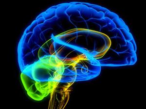 20110610191534-cerebro-leer.jpg