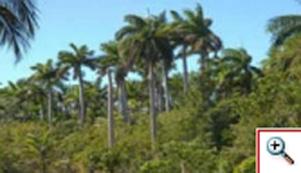 20120127135015-area-forestada.jpg