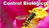 20140218214711-control-biologico.jpg