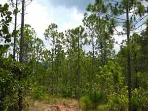 20160621142243-bosque-.jpg