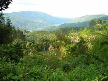 20100621132352-bosque.jpg