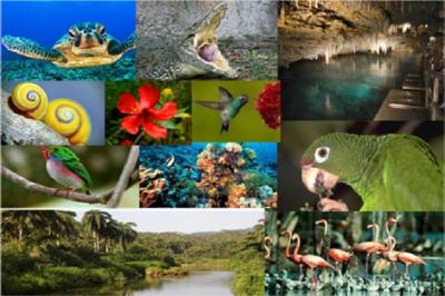 20190701014739-biodiversidad-cubana1.png