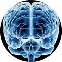 ¿Qué sucede en tu cerebro cuando se te ocurre una idea?