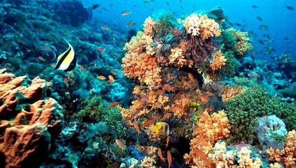 Según expertos, los arrecifes coralinos de La Florida están muriendo aceleradamente. Foto / um.
