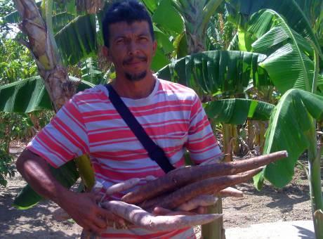 Rigoberto Naranjo Pelegrín muestra las llamativas yucas de dos colores en un mismo cangre. Foto: A. Leyva
